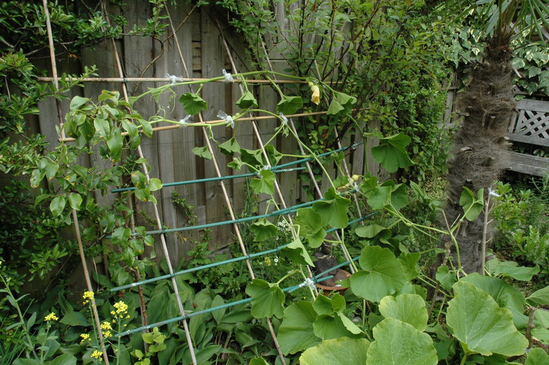 Description: Description: Description: Description: Description: Description: trellis for squash or pumpkin