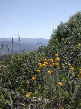 Description: looking down into Santa Ynez Valley from atop San Marcos Pass, Santa Barbara County, California. Photo credit Susan Kramer.