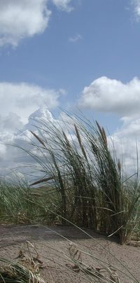photo credit Susan Kramer; dunes by North Sea