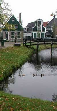 photo credit Susan Kramer, mallards and geese in canal in Holland