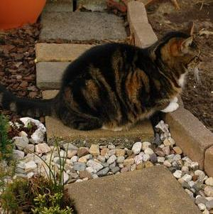 photo credit Stan Schaap; cat in garden