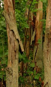 Description: Castricum woods; photo credit Stan Schaap