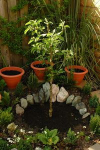 Photo credit of garden by Susan Kramer