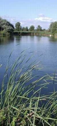 Description: Description: Description: Description: Description: Description: Description: Photo of small pond in Dunes National Park, The Netherlands