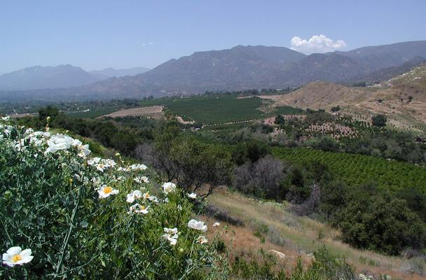 Click for site map. View north from Meditation Mount, Ojai, California USA. 'The endless variety of nature.' Photo credit Susan Kramer.